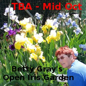 Betty Grays – Open Iris Garden – 2016
